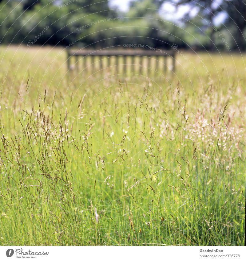 Barfuß durchs Gras. Natur schön Pflanze Umwelt Wiese Wärme Bewegung Stimmung Park frei Sträucher Urelemente viele Duft