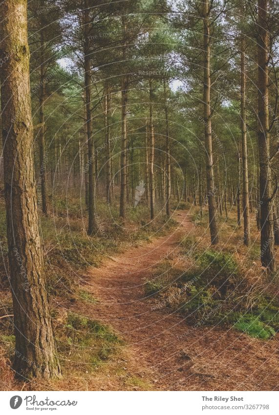 Wald im Winter Lifestyle Wellness Freizeit & Hobby Ferien & Urlaub & Reisen Tourismus Camping wandern Umwelt Natur Landschaft Baum Sträucher atmen Fitness