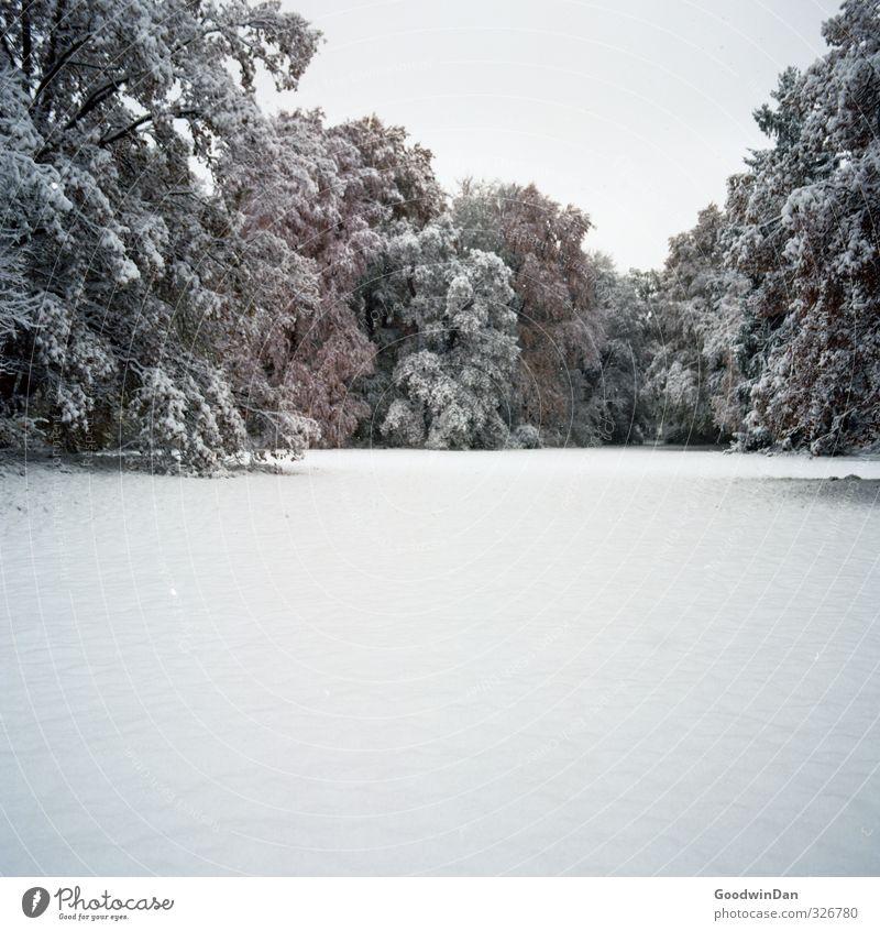 Knöcheltief. Umwelt Natur Winter Klima Wetter Schönes Wetter Schnee Pflanze Baum Park Wiese einfach fantastisch frisch groß kalt nass rot weiß Stimmung Farbfoto