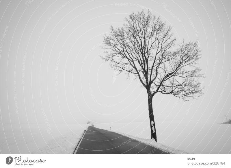 Spät dran Winter Schnee Umwelt Natur Landschaft Himmel Nebel Baum Feld Verkehr Verkehrswege Straße Wege & Pfade Traurigkeit ästhetisch authentisch Unendlichkeit