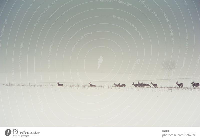 Rehkapitulieren Jagd Umwelt Natur Landschaft Tier Urelemente Himmel Wolkenloser Himmel Horizont Winter Nebel Schnee Feld Wildtier Tiergruppe Herde rennen