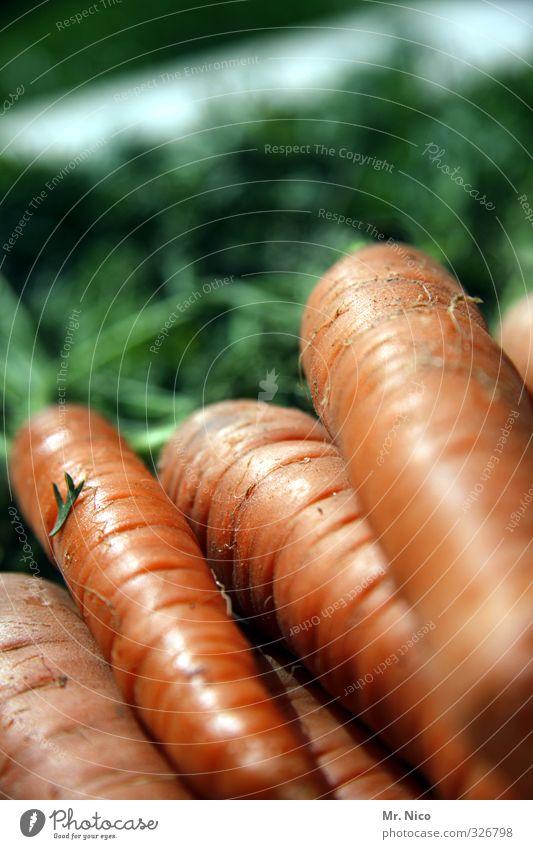 happy birthday fottokäääs Lebensmittel Gemüse Ernährung Bioprodukte Diät Möhre Gesundheit Vegetarische Ernährung frisch lecker orange Zutaten Ernte knackig