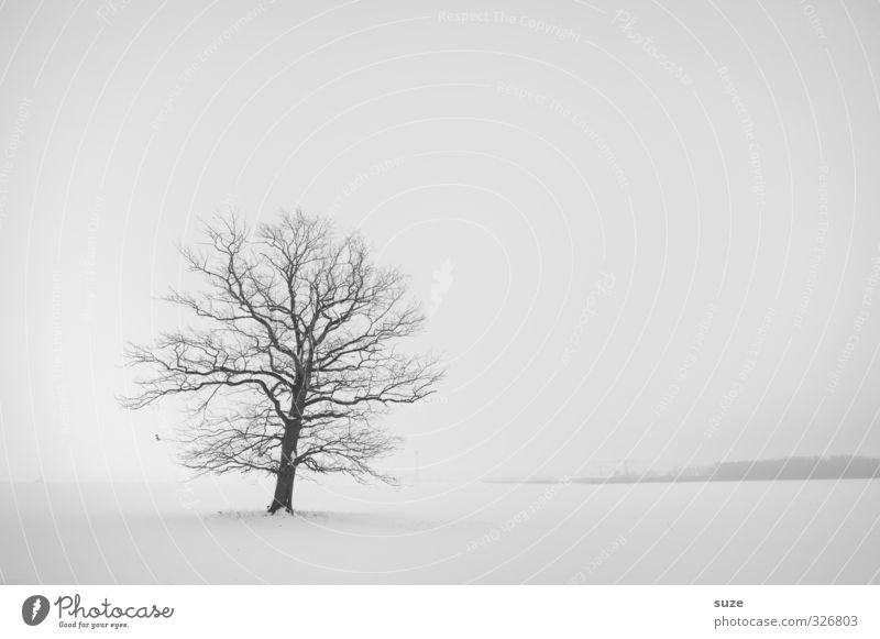 Lautlos im Schnee Winter Umwelt Natur Landschaft Pflanze Urelemente Himmel Wolkenloser Himmel Horizont Klima Nebel Baum Traurigkeit authentisch hell kalt