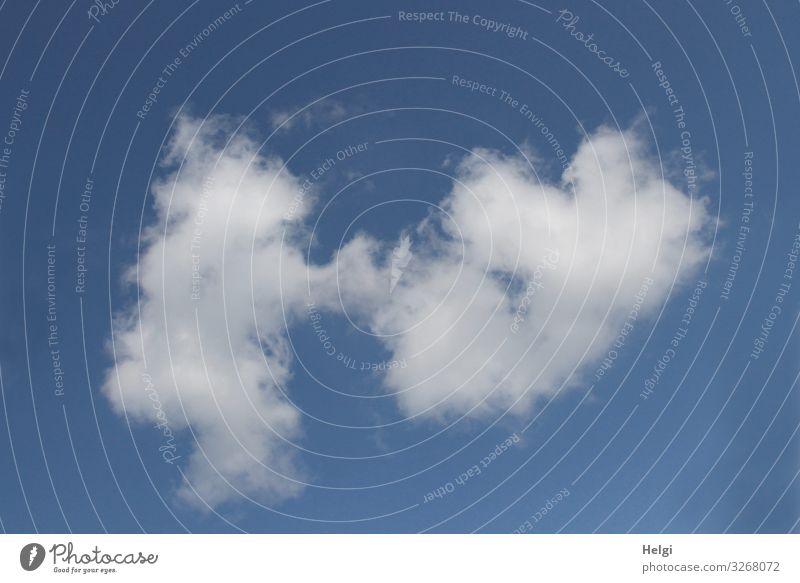tanzende Wolken vor blauem Himmel Umwelt Natur Frühling Schönes Wetter Bewegung fliegen Tanzen außergewöhnlich Zusammensein einzigartig natürlich weiß bizarr