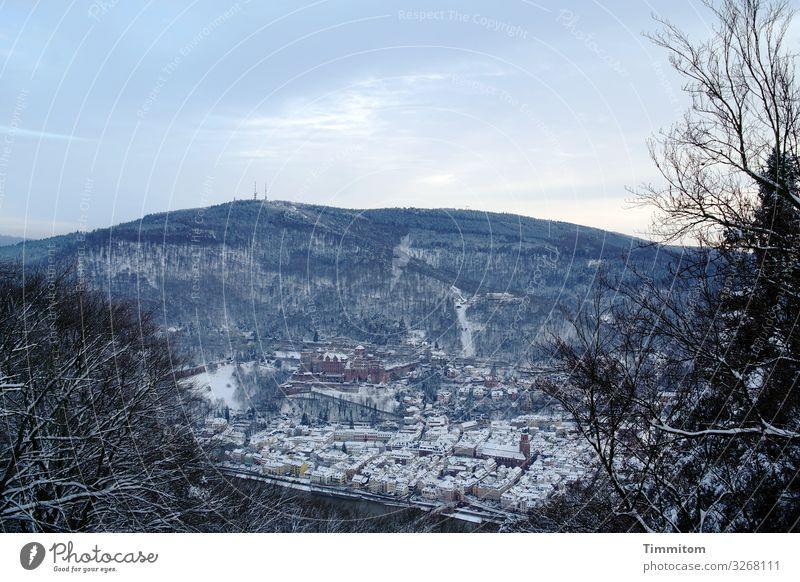 Heidelberg im Winter (1) Ferien & Urlaub & Reisen Umwelt Natur Landschaft Pflanze Eis Frost Schnee Baum Sträucher Wald Hügel Burg oder Schloss Ruine