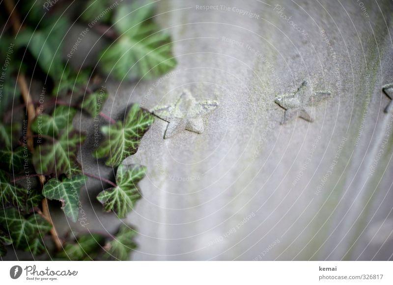 Sterne Umwelt Natur Pflanze Efeu Grünpflanze Grabstein Stein Zeichen Stern (Symbol) Wachstum grau grün Dekoration & Verzierung Farbfoto Gedeckte Farben