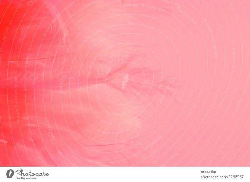 Federn auf rosa Hintergrund Lifestyle Reichtum elegant Stil Design exotisch schön Haut Wimperntusche Rouge Gesundheit Leben harmonisch Sinnesorgane Erholung