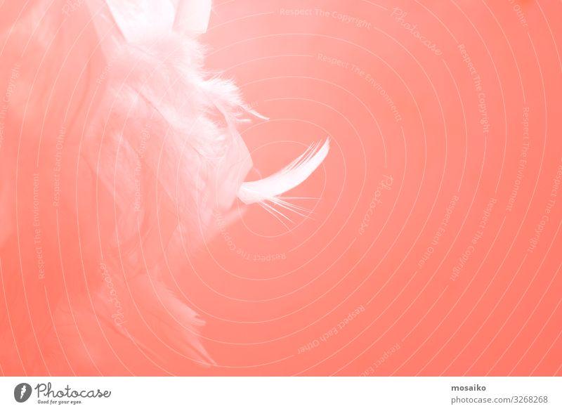 Federn auf rosa Hintergrund Lifestyle Reichtum elegant Stil Design exotisch schön Haut Kosmetik Schminke Gesundheit Wellness Leben harmonisch Wohlgefühl