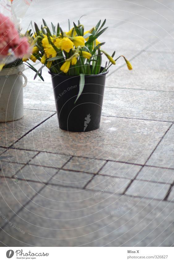 Tulpeneimer Frühling Blume Blühend verkaufen Blumenhändler Eimer Gelbe Narzisse Blumenstrauß Wochenmarkt Blumenvase Blumenladen Farbfoto Außenaufnahme