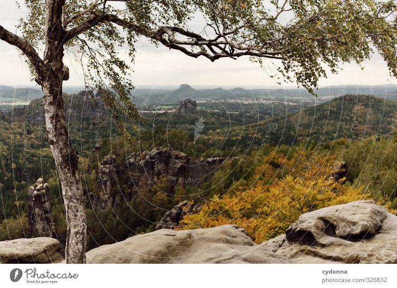 Weitsicht Ferien & Urlaub & Reisen Tourismus Ausflug Abenteuer Ferne Freiheit Berge u. Gebirge wandern Umwelt Natur Landschaft Herbst Wind Baum Wald Felsen