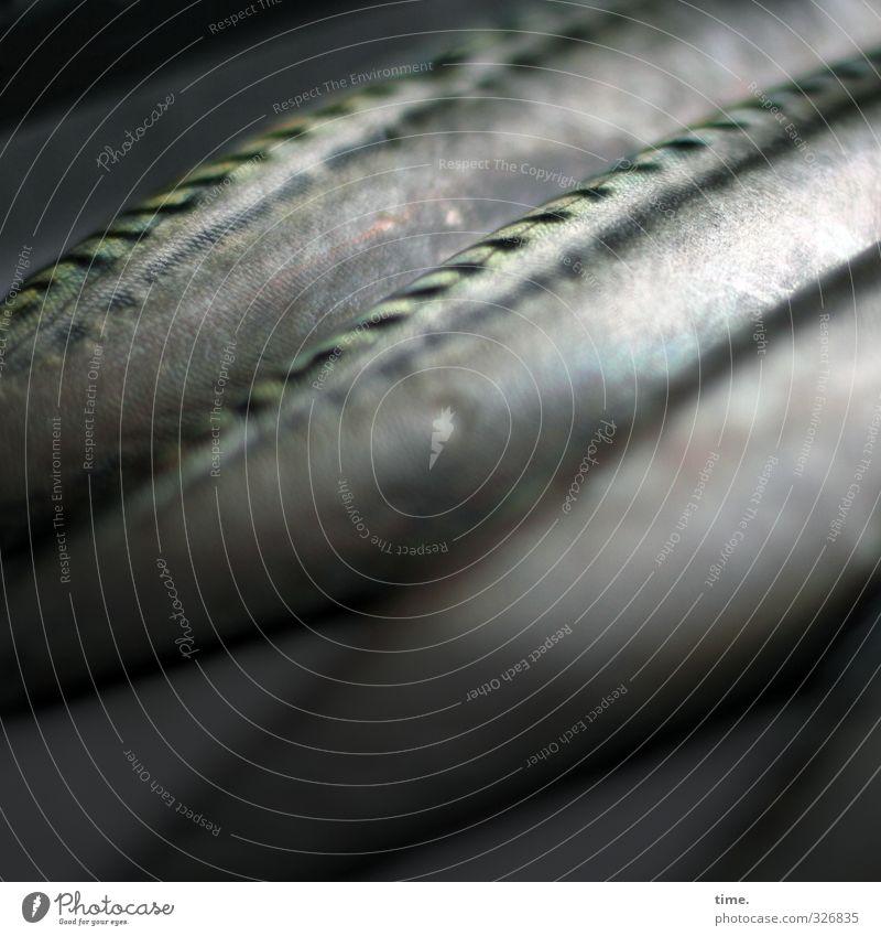 Wasserzeichen | Unfreiwilliger Landgang Lebensmittel Fisch Ernährung Schuppen Forelle 3 Tier liegen dunkel nackt Tod gleich Ordnung Vergänglichkeit