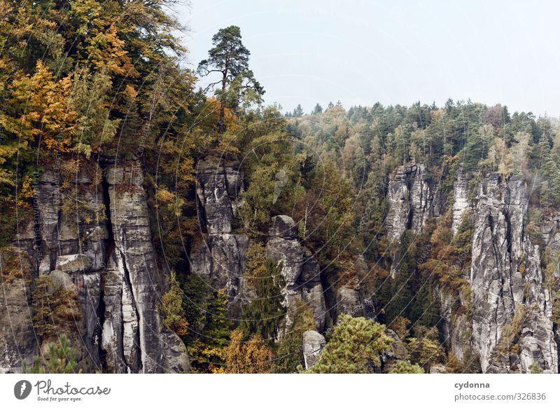 Nah am Abgrund Natur Ferien & Urlaub & Reisen Baum Erholung Landschaft ruhig Ferne Wald Umwelt Berge u. Gebirge Leben Herbst Freiheit Horizont Felsen Nebel