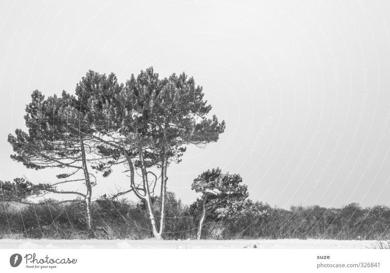 Schwarzweißgrau | im Winter Himmel Natur Baum Einsamkeit Landschaft kalt Umwelt Schnee Gefühle Traurigkeit trist Sträucher ästhetisch Urelemente
