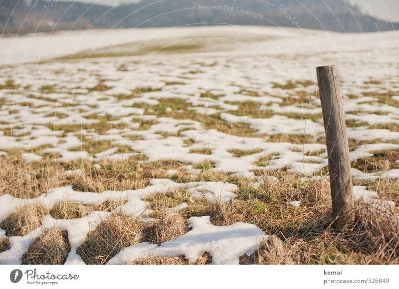 Tauwetter Umwelt Natur Landschaft Frühling Winter Schönes Wetter Eis Frost Schnee Pflanze Gras Grünpflanze Wiese Feld Pfosten Holz braun grün einzeln tauen