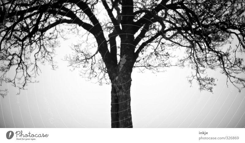 Spooky tree Baum Einsamkeit Winter dunkel kalt Herbst Nebel Wachstum Wandel & Veränderung einzigartig geheimnisvoll gruselig schlechtes Wetter Eiche