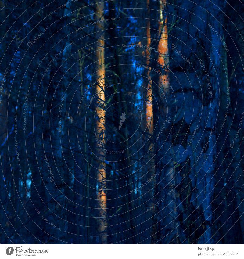 wald, wald Umwelt Natur Baum Wald blau orange Baumstamm Doppelbelichtung Baumrinde Birke Abendsonne Kiefer Farbfoto mehrfarbig Außenaufnahme Experiment