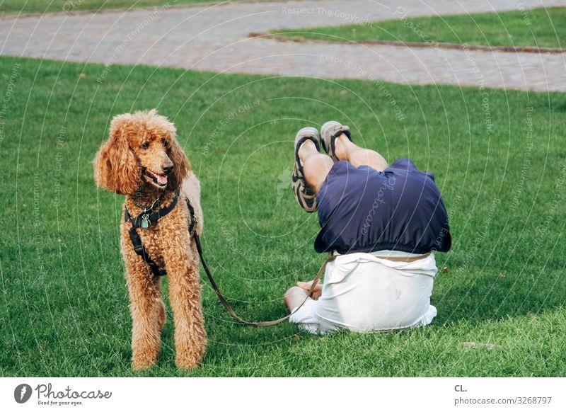 vierbeiner Gesundheit sportlich Fitness harmonisch Sport Sport-Training Yoga Mensch maskulin Mann Erwachsene Beine 1 Gras Park Wiese Tier Hund Tiergesicht