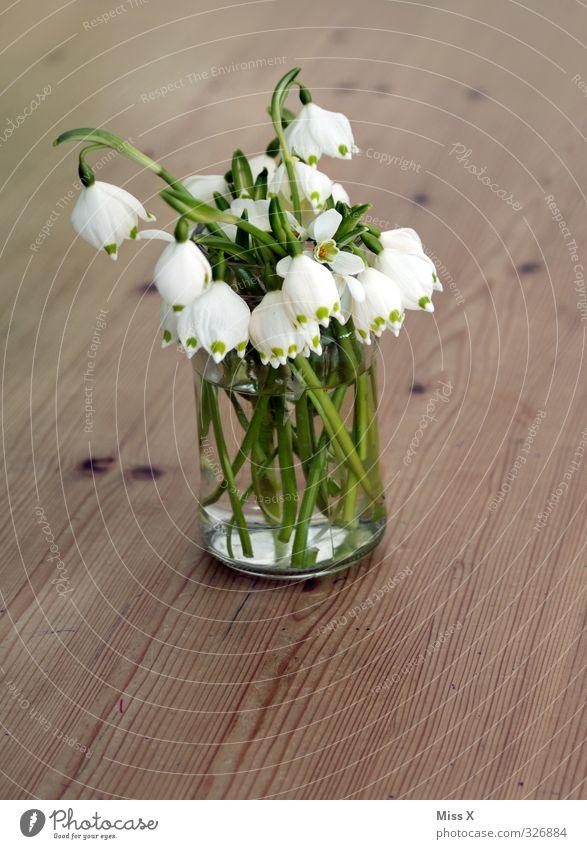 Märzenbecher Dekoration & Verzierung Frühling Blume Blüte Blühend Duft Frühblüher Frühlingsblume Schneeglöckchen Blumenvase Blumenstrauß Tisch Farbfoto