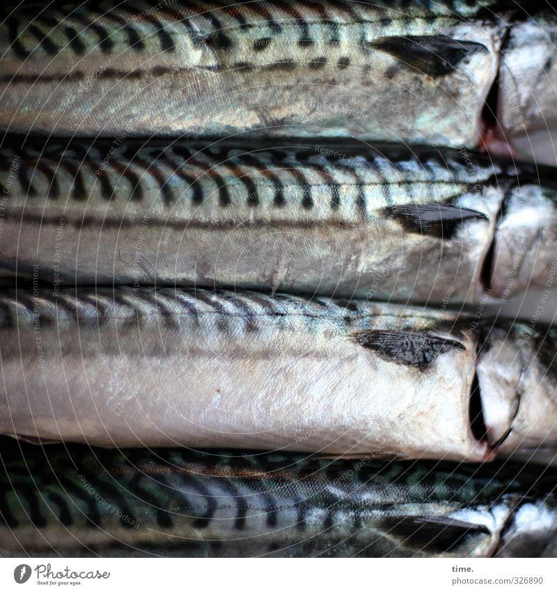 Esswahn | Freitagsritual Lebensmittel Fisch Ernährung Totes Tier Schuppen Makrele 4 glänzend Begierde Tod Appetit & Hunger Schmerz Enttäuschung Genusssucht