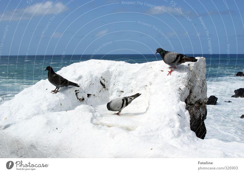 wir sind | Infiziert Himmel Natur blau Wasser weiß Sommer Meer Tier Wolken Umwelt Küste hell Felsen natürlich Vogel Wellen