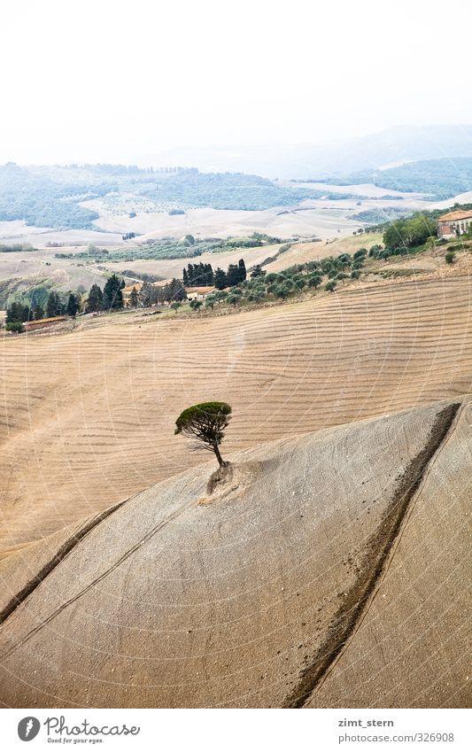 tuscany tree Natur Landschaft Erde Herbst Baum Feld Italien Toskana ästhetisch Unendlichkeit nachhaltig natürlich trocken braun grün Zufriedenheit achtsam ruhig