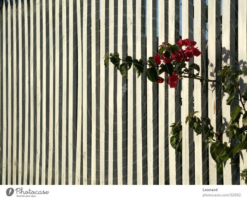 Blume Sonne Wand Zaun