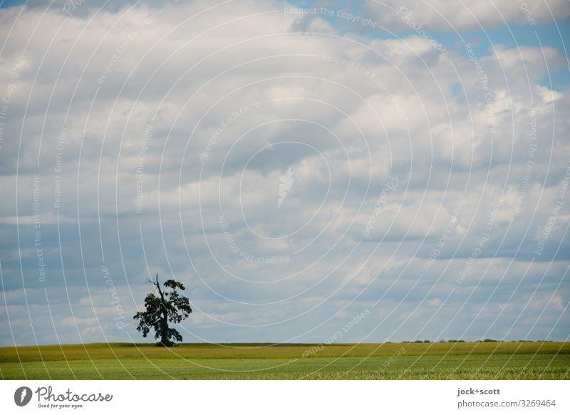 weitsichtig und allein auf weiter Flur Landschaft Luft Himmel Wolken Sommer Klimawandel Baum Feld Müritz authentisch frei natürlich Wärme Stimmung Ausdauer