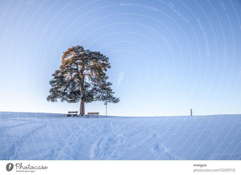 Mulzer Föhre bei Kempten im Winter bei Schnee Umwelt Natur Landschaft Himmel Nachthimmel Horizont Sonnenlicht Wetter Schönes Wetter Eis Frost Feld Alpen