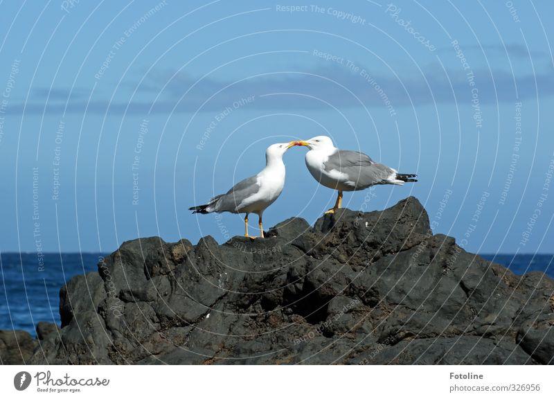 Küsschen! Umwelt Natur Urelemente Wasser Himmel Wolken Sommer Küste Riff Meer Tier Vogel Flügel 2 Tierpaar hell natürlich blau Möwe Farbfoto mehrfarbig