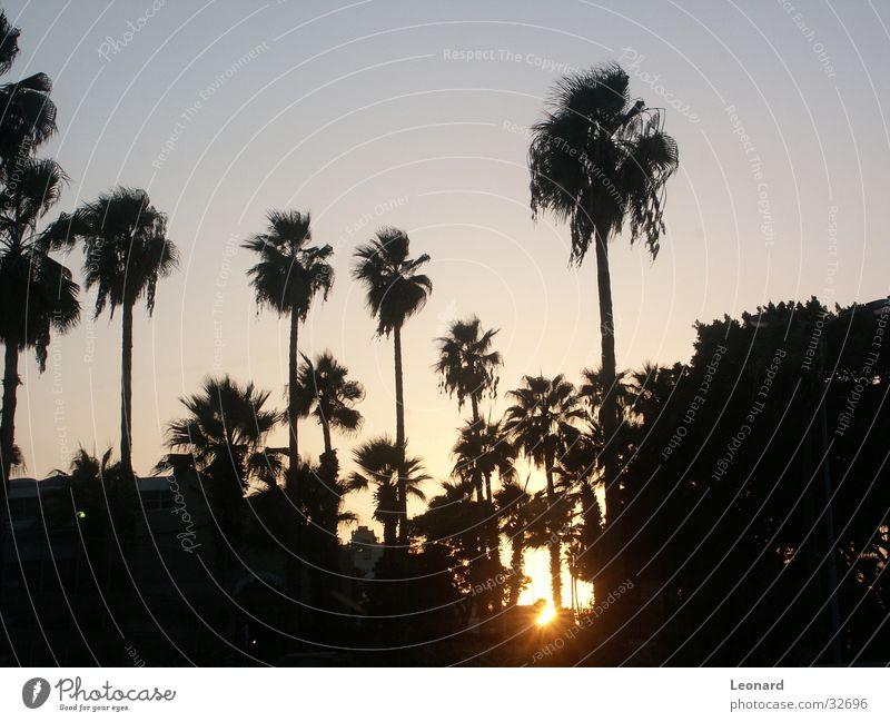 Sonnenuntergang Himmel Baum Palme glühen