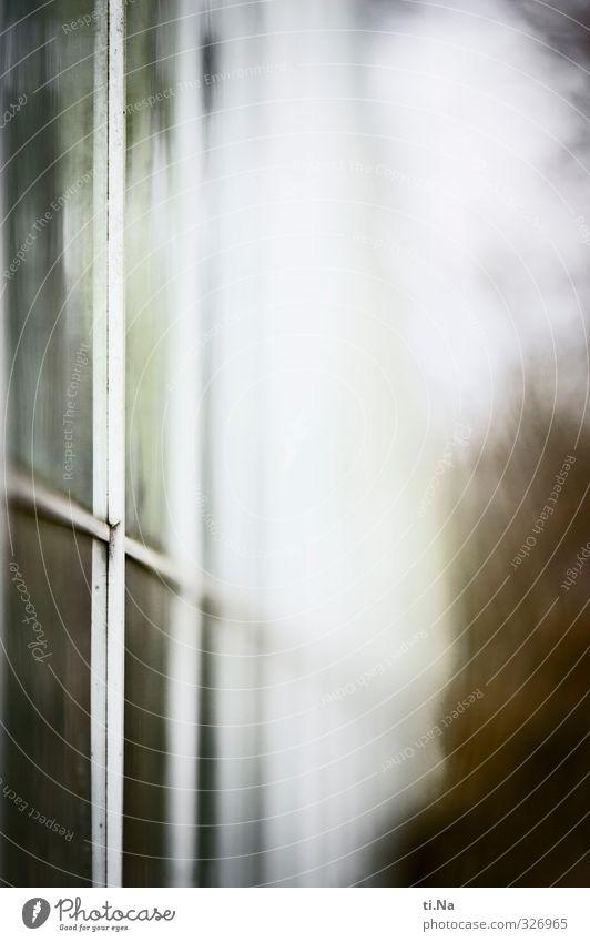 Baumaterial | Edelstahl und Glas weiß Fenster kalt Architektur grau braun groß ästhetisch Schutz eckig Gewächshaus Gärtnerei
