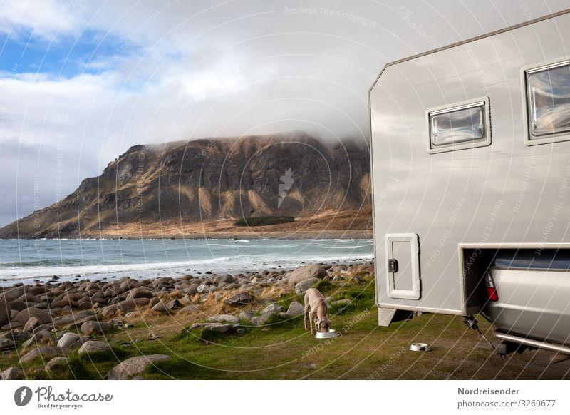 Camping auf den Lofoten Ferien & Urlaub & Reisen Natur Hund Wasser Landschaft Meer Wolken Tier Berge u. Gebirge Wiese Küste Freiheit Felsen Häusliches Leben