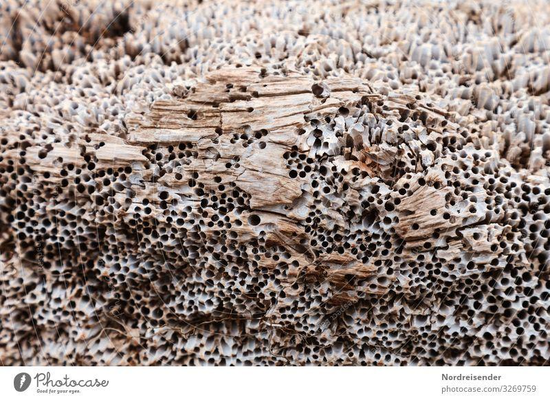 Schiffsbohrwurm in altem Holz Meer Hintergrundbild Küste kaputt verfaulen Schifffahrt altehrwürdig maritim Loch skurril bizarr Oberfläche Rätsel Schädlinge