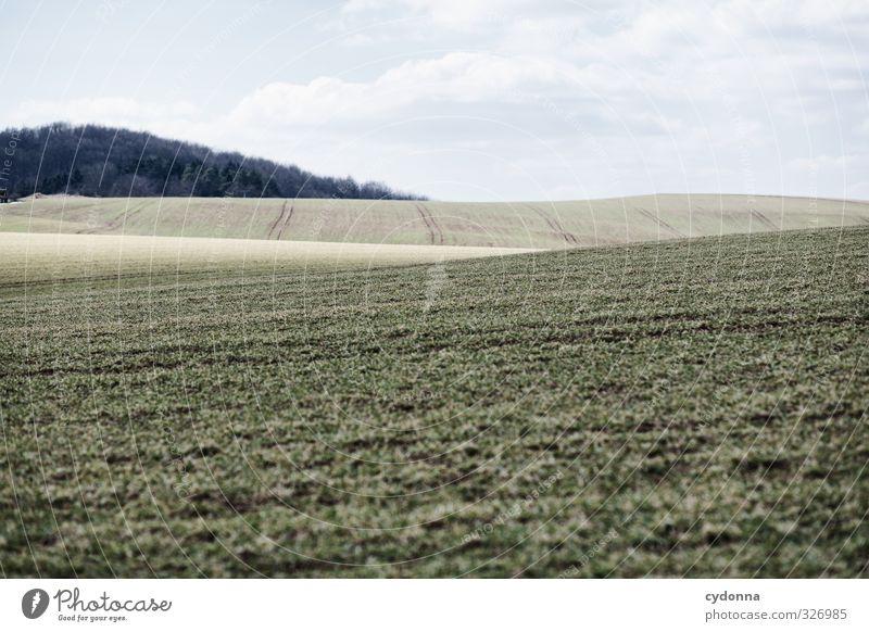 Sanfte Wogen Himmel Natur Einsamkeit ruhig Landschaft Ferne Wald Umwelt kalt Wiese Gras Frühling Wege & Pfade Freiheit träumen Feld