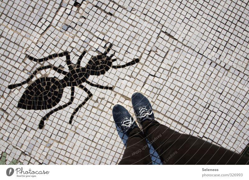 ant Mensch Beine Fuß 1 Hose Jeanshose Schuhe Tier Ameise Insekt Stein Zeichen bedrohlich groß klein Kreativität Kunst Natur Mosaik Farbfoto Außenaufnahme Tag