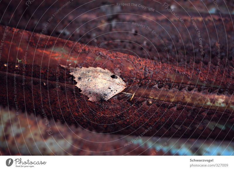 Sägeblatt / Laubsäge Industrie Handwerk Werkzeug Tier Blatt Metall Rost alt verblüht dehydrieren eckig trashig trist braun Müdigkeit Unlust Schmerz Einsamkeit