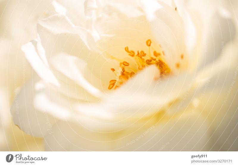 Frühlingsgefühle Unschärfe Makroaufnahme Detailaufnahme Nahaufnahme natürlich schön träumen genießen Blühend Wiese Park Garten Blüte Blume Sonne Pflanze Natur