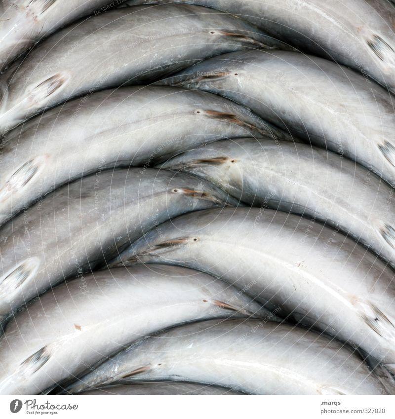 Fisch schön liegen Lebensmittel Ordnung Ernährung einfach Bioprodukte Markt Symmetrie Marktstand Fischmarkt