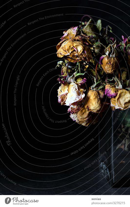 verloren / welke Rosen in Glasvase alt grün schwarz gelb Blüte Tod braun rosa Häusliches Leben trocken Vase vertrocknet verdursten