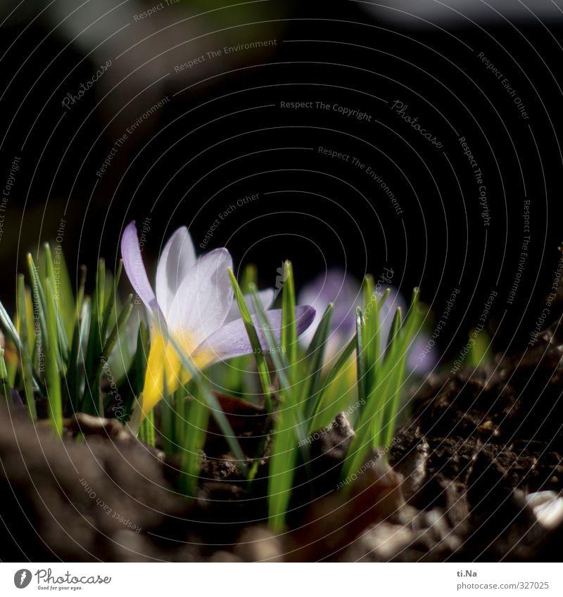 Schlussverkauf grün schön Pflanze Tier Blatt schwarz gelb Blüte natürlich Garten braun Park wild ästhetisch Freundlichkeit Blühend