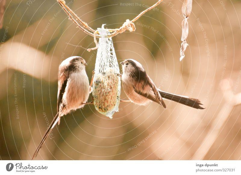 Futtern Natur Tier Winter kalt Umwelt Essen Garten Vogel Park Wildtier Tierpaar Jahreszeiten hängen Fressen kahl füttern