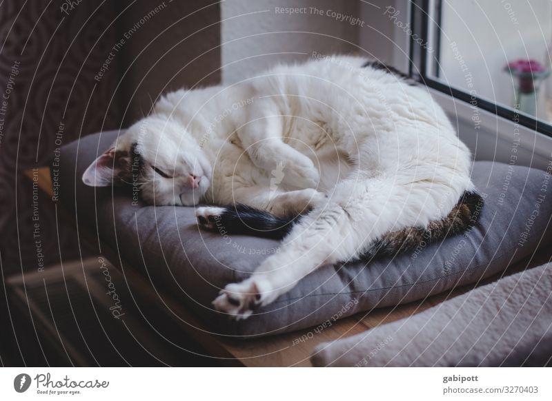 1200 - erstma ausruhn Tier Haustier Katze Erholung liegen schlafen träumen alt natürlich niedlich Originalität weich Gelassenheit Pause unschuldig