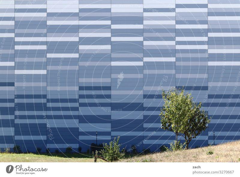fifty shades of blue Baum Wiese Stadt Stadtzentrum Stadtrand Haus Hochhaus Industrieanlage Mauer Wand Fassade Linie blau grau Farbfoto Außenaufnahme Muster