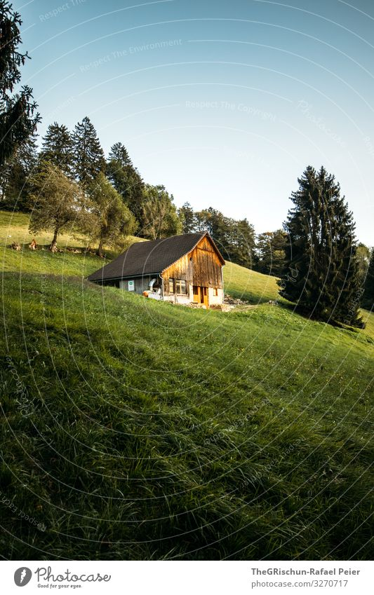 Swiss - Chalet Natur ästhetisch Haus Hütte Alpen Schweiz Heimat maienfeld heididorf Heidi Kanton Graubünden alphütte Baum Licht Schatten Gras Weide Farbfoto