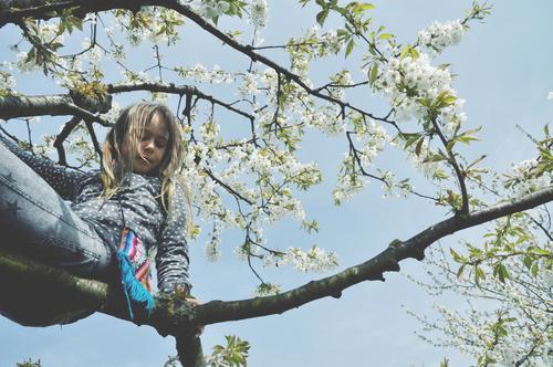 baumkletterin (2) Baum Ast blühen Blüte Frühling oben Klettern Kind Mädchen jungenhaft Freude Lebensfreude Natur wild Außenaufnahme Bäumeklettern Mut gewagt