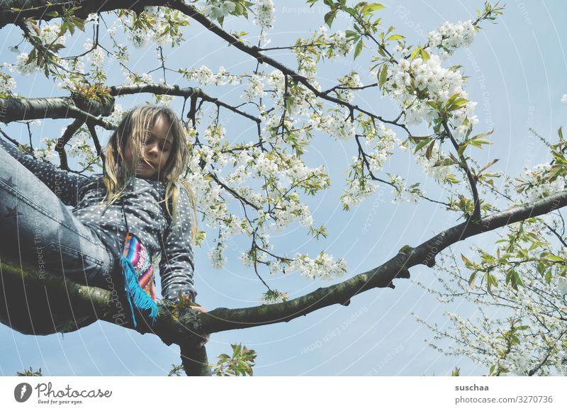 mädchen sitzt auf einem ast in einem frühlingsbaum Baum Ast blühen Blüte Frühling oben Klettern Kind Mädchen jungenhaft Freude Lebensfreude Natur wild