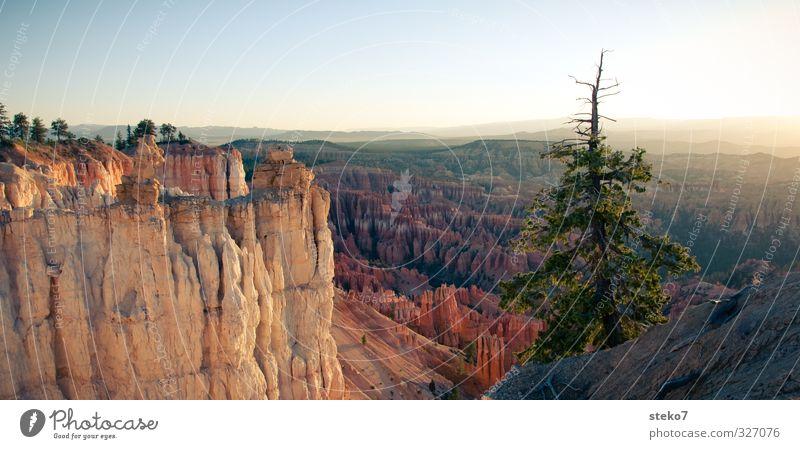 Utah morning II Baum ruhig Ferne Berge u. Gebirge Freiheit Felsen Horizont orange gold Idylle Wolkenloser Himmel Schlucht Kiefer Bryce Canyon