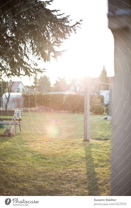 Aprilsonne Natur Pflanze Baum Garten Schönes Wetter Tanne Gartenarbeit Ordnungsliebe Gartengeräte Gartenbank
