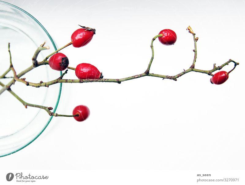 Hagebutten elegant Stil Design Innenarchitektur Dekoration & Verzierung Weihnachten & Advent Natur Herbst Winter Pflanze Zweige u. Äste Vase leuchten ästhetisch