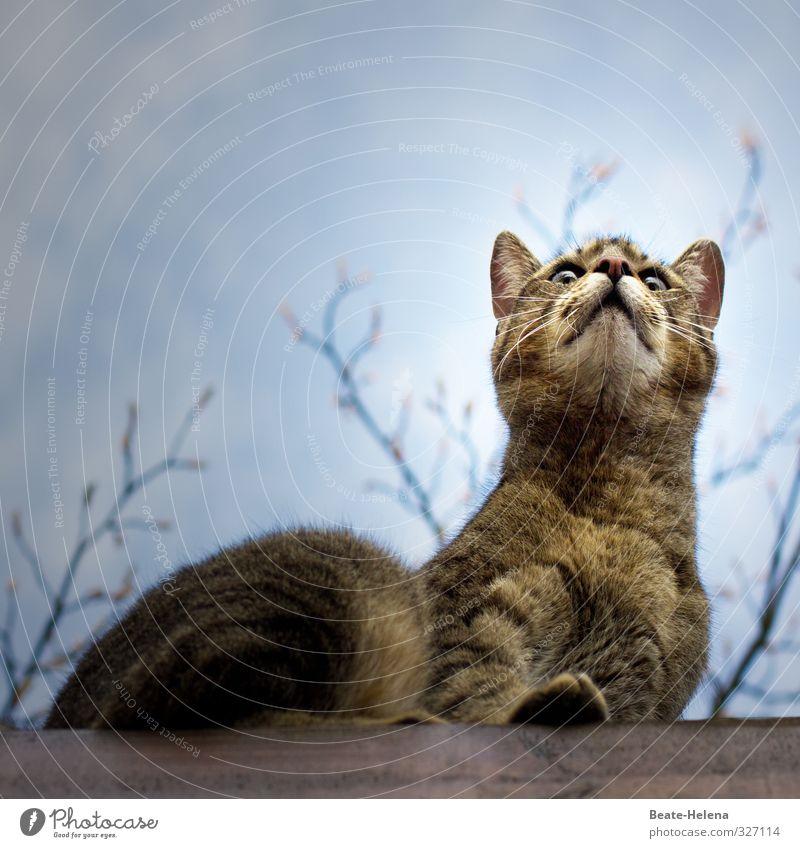Was issn hier los? Katze Natur blau Tier außergewöhnlich braun Kraft sitzen beobachten Abenteuer entdecken Wachsamkeit Jagd Haustier Euphorie Publikum